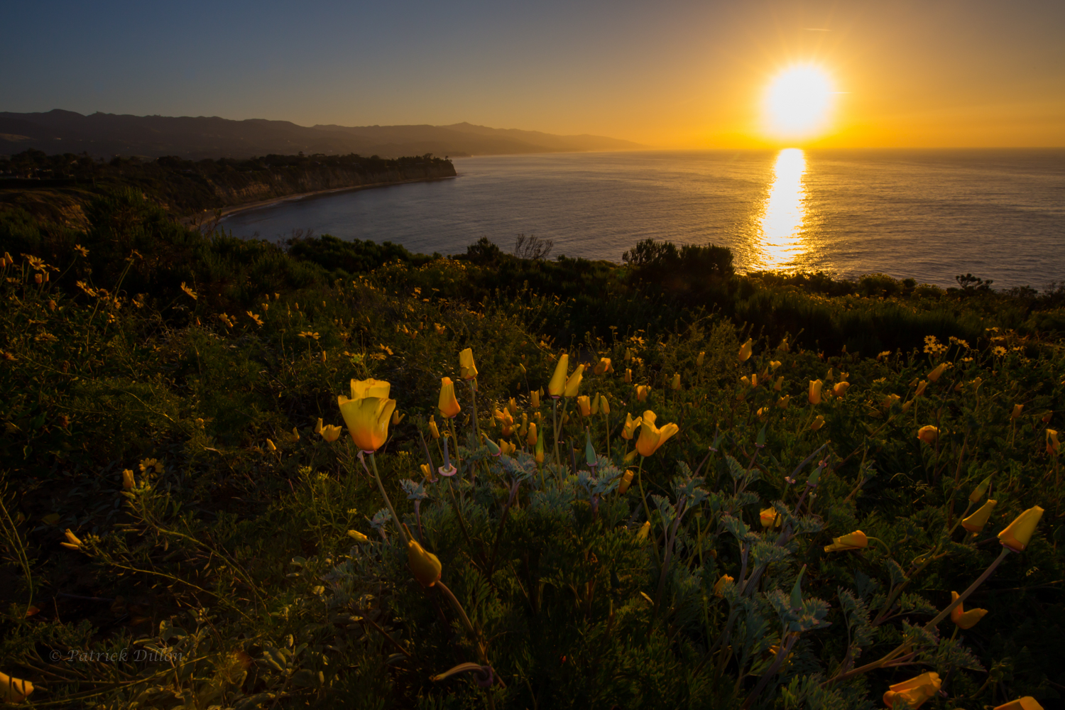 Malibu poppies awaiting the sunrise