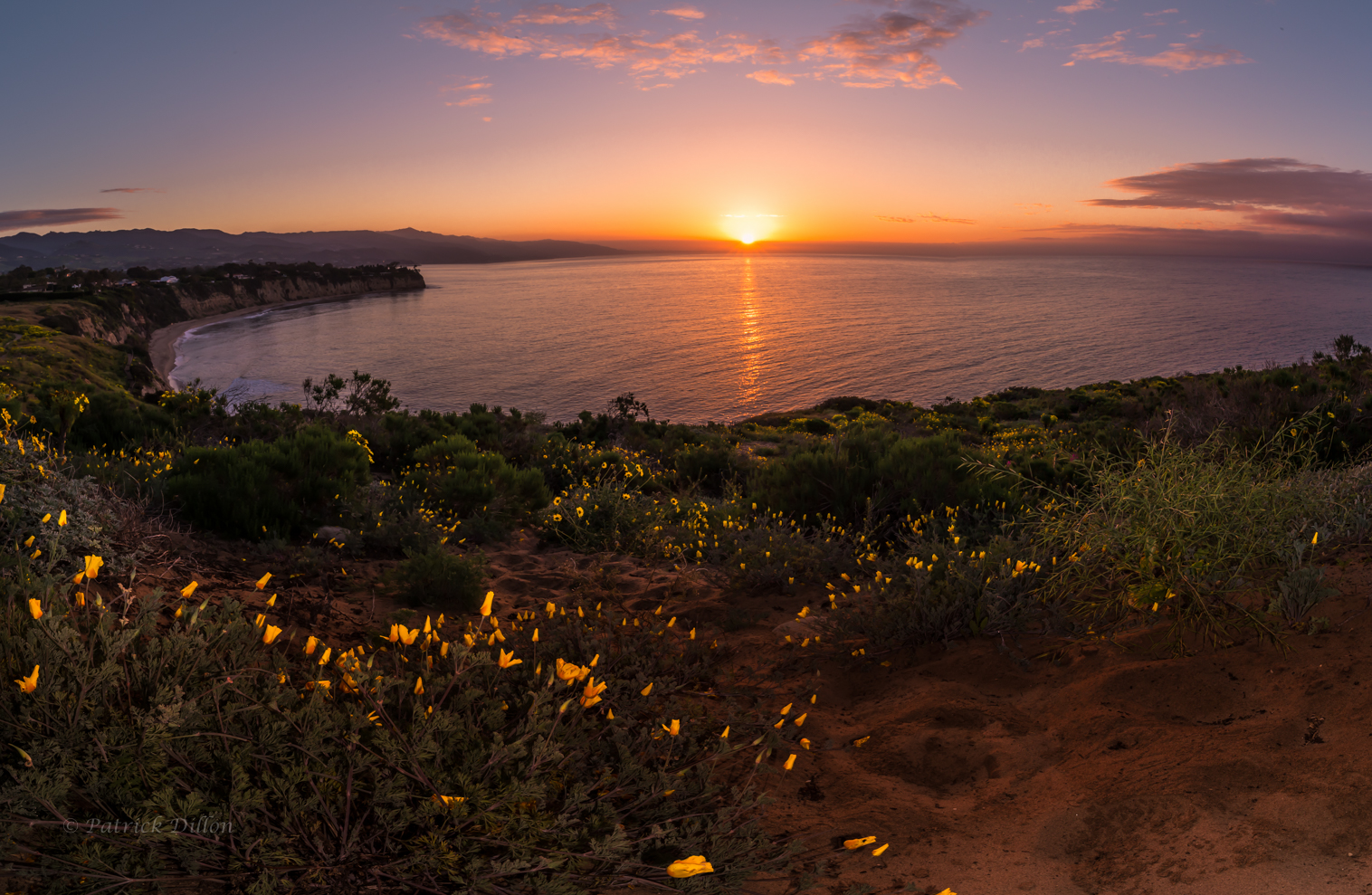 malibu sunset and flower bloom poppies