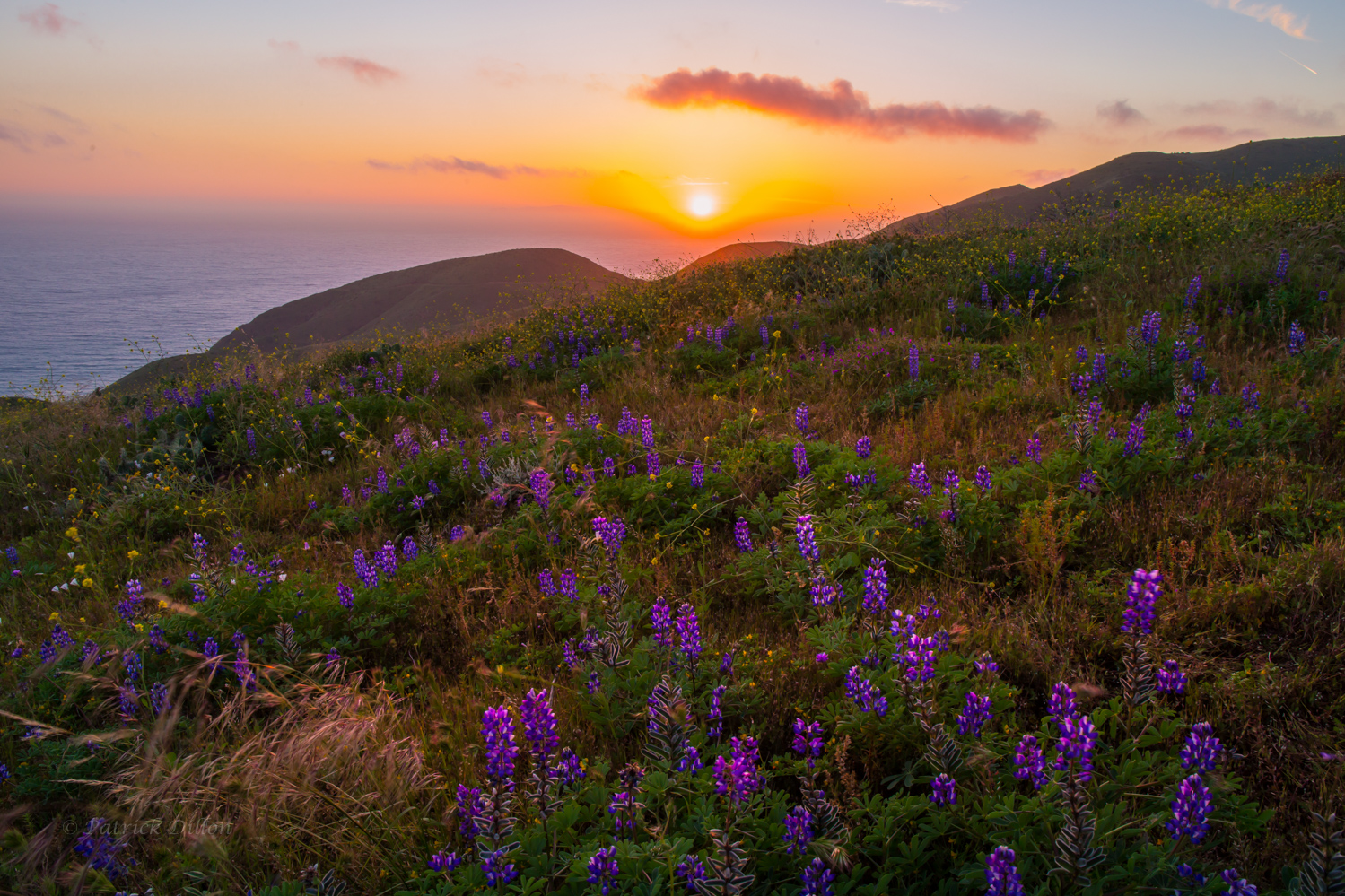Malibu sunset with lupine and sun