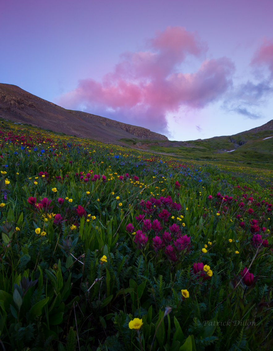 paint brush fuscia sunset - San Juan Mountians