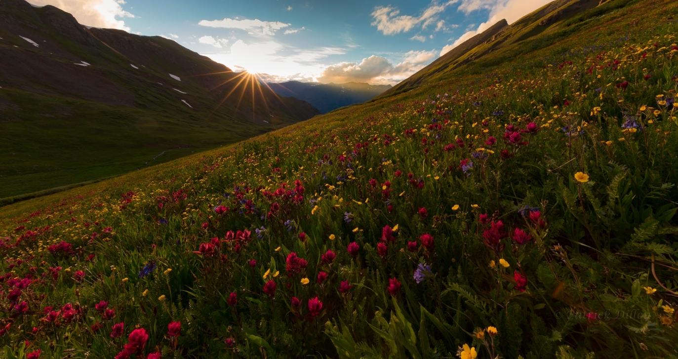 San Juan Mountain sunstar with wildflowers