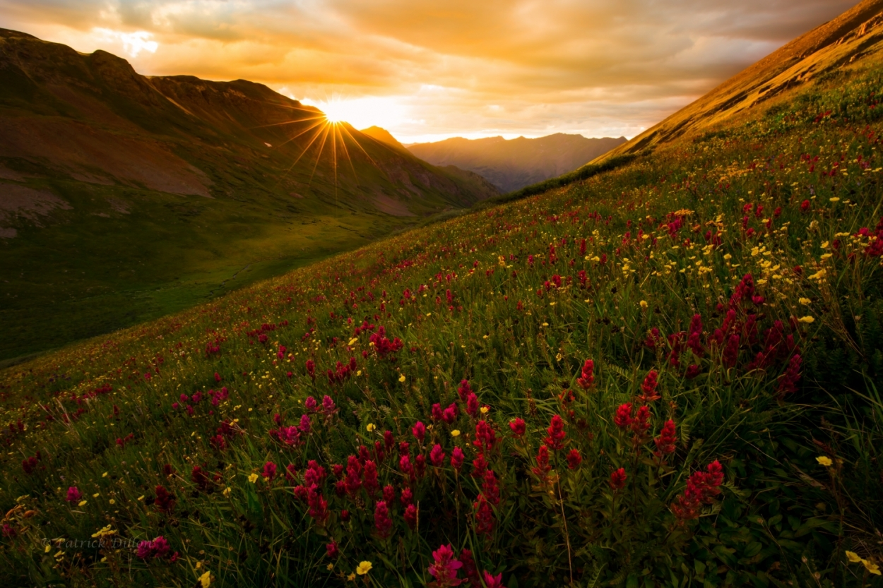 Golden sunset with wildflowers San Juan Mountians.jpg-7901