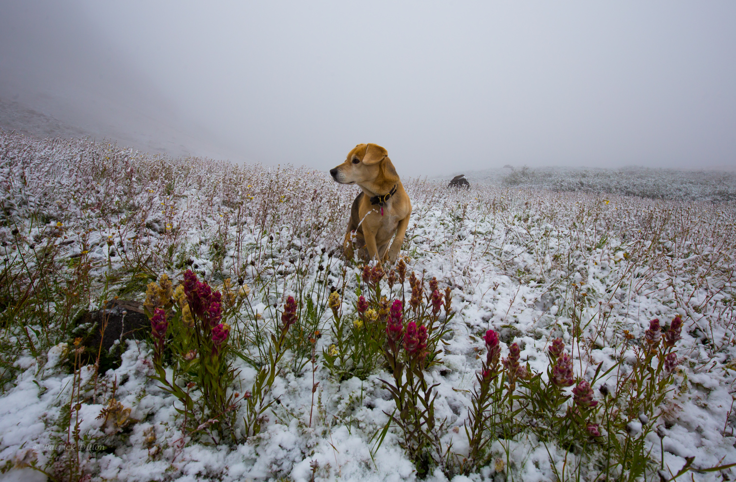 paintbrush-next-morning-with-dog-after-snow-email-fr-3693